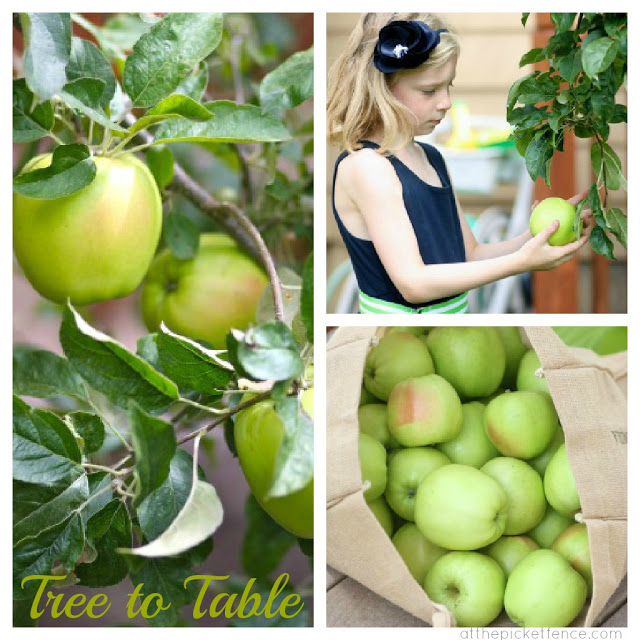 Apple Picking Recipes…from Tree to Table
