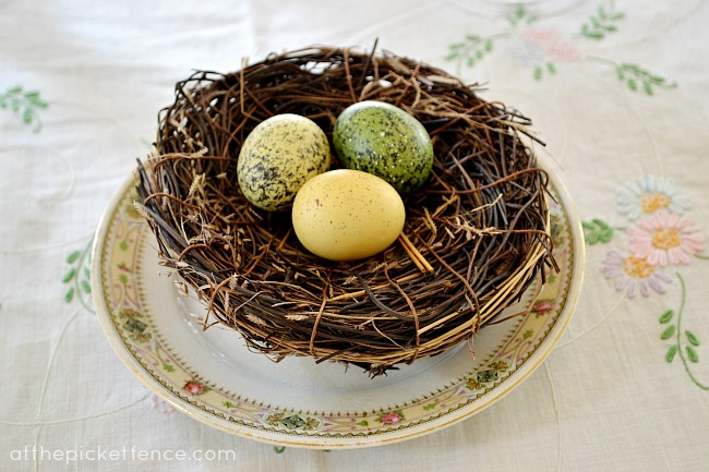bird eggs in nest At the Picket Fence