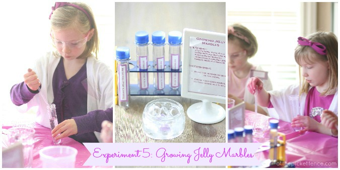 Growing Jelly Marbles science experiment www.atthepicketfence.com