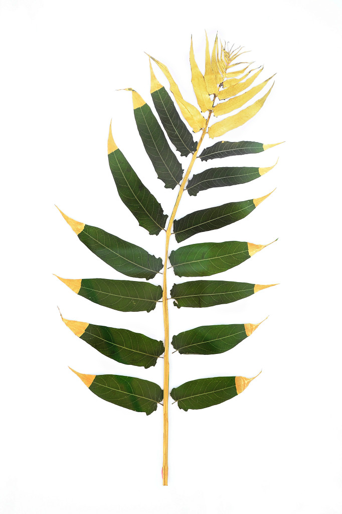Gilding and framing botanicals