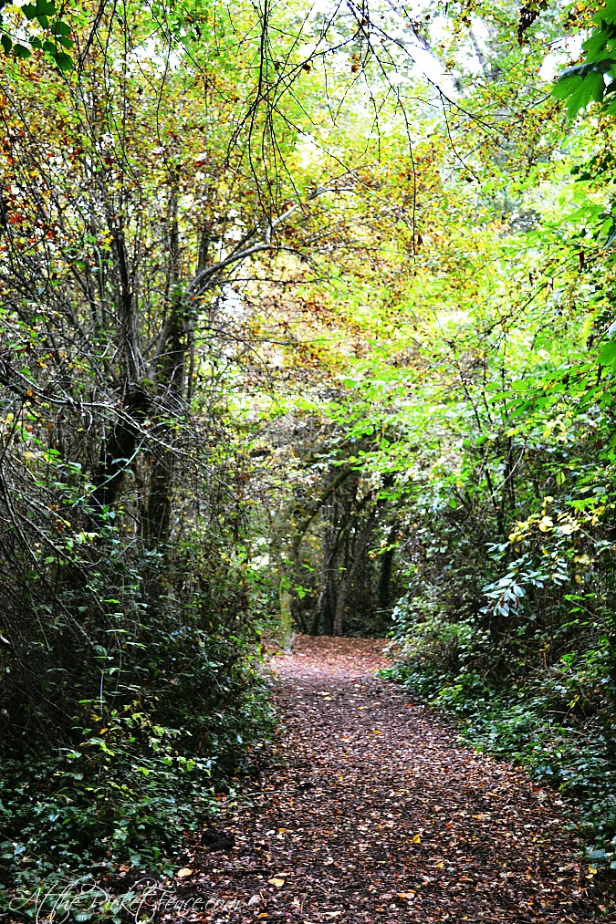 path in the fall from atthepicketfence.com