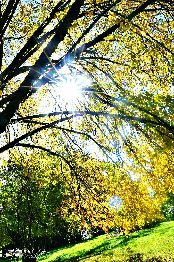 sunlight coming through tree atthepicketfence.com