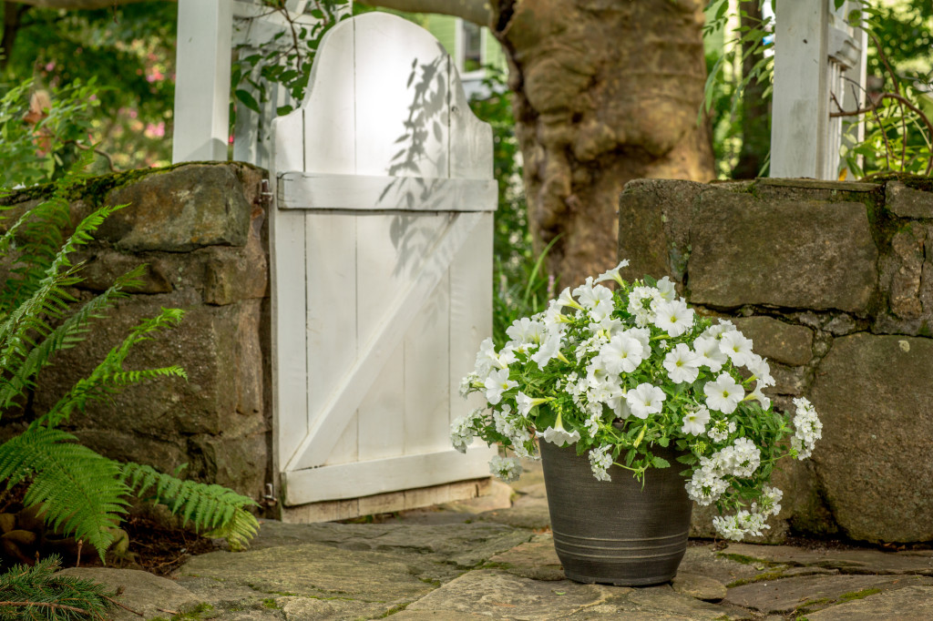 Tips for perfect potted flowersand the southern living plant ashville nc spring white flower container mightylinksfo