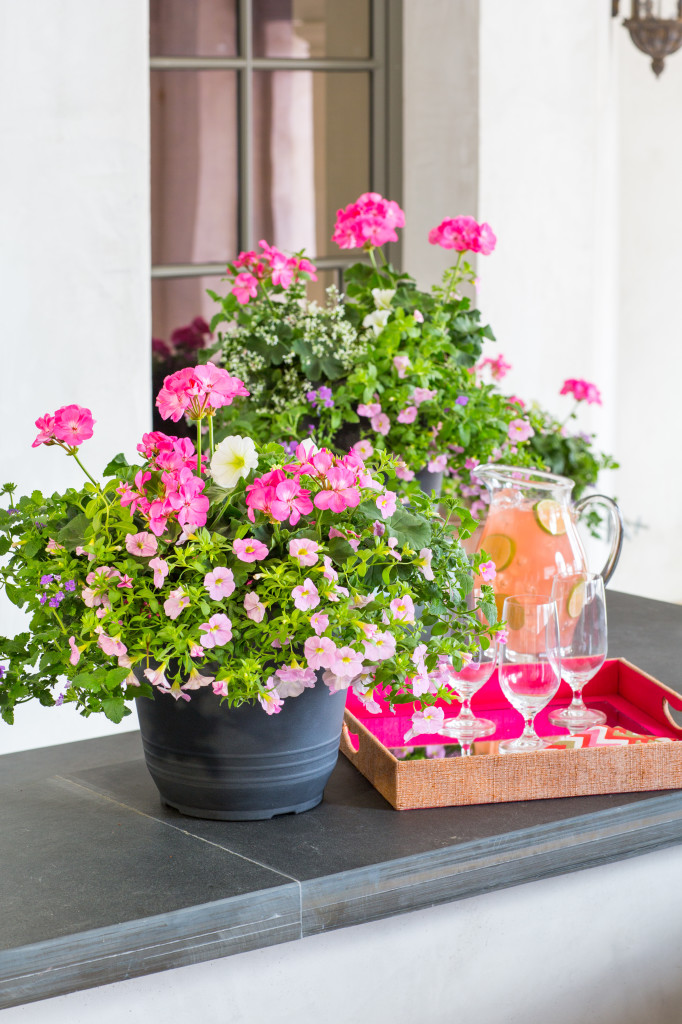 Tips for perfect potted flowers…and the Southern Living ...