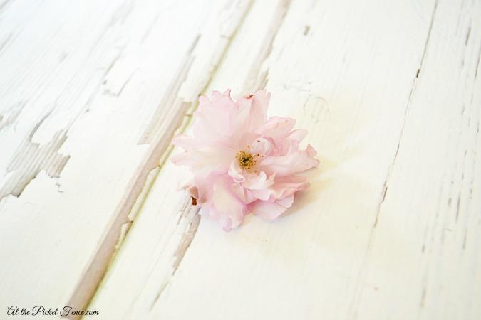 cherry blossom - Copy