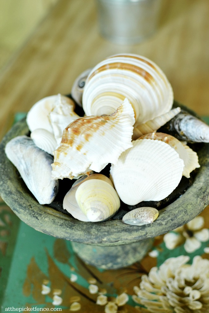 seashells on coffee table
