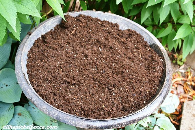 bird bath filled with potting soil
