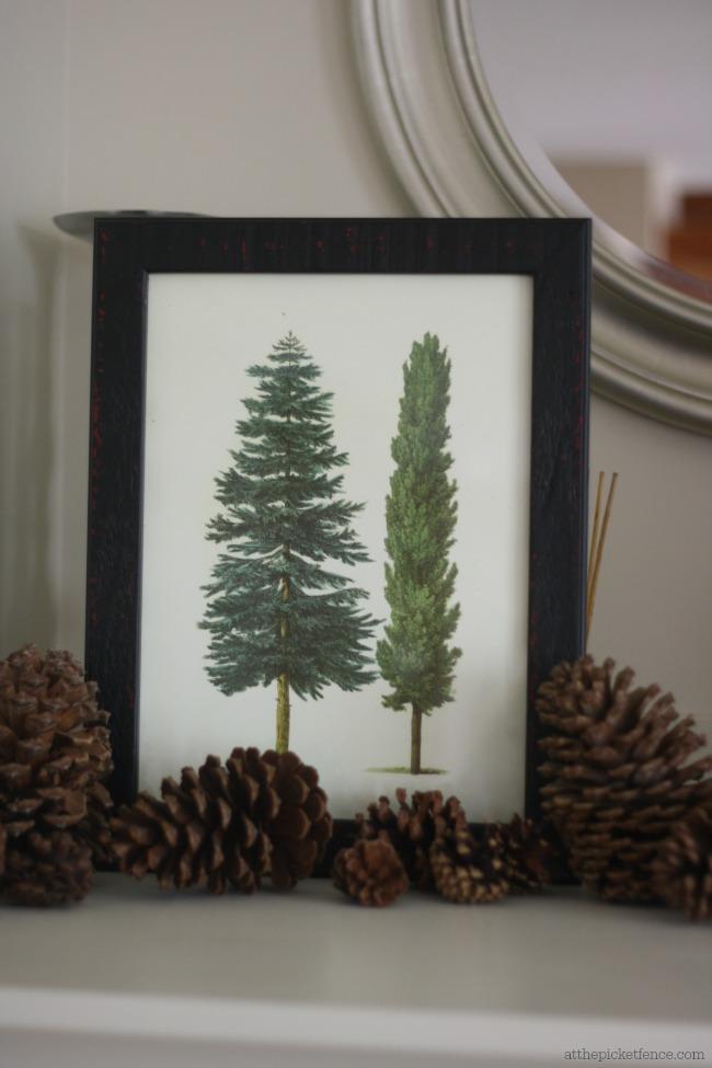 treephoto