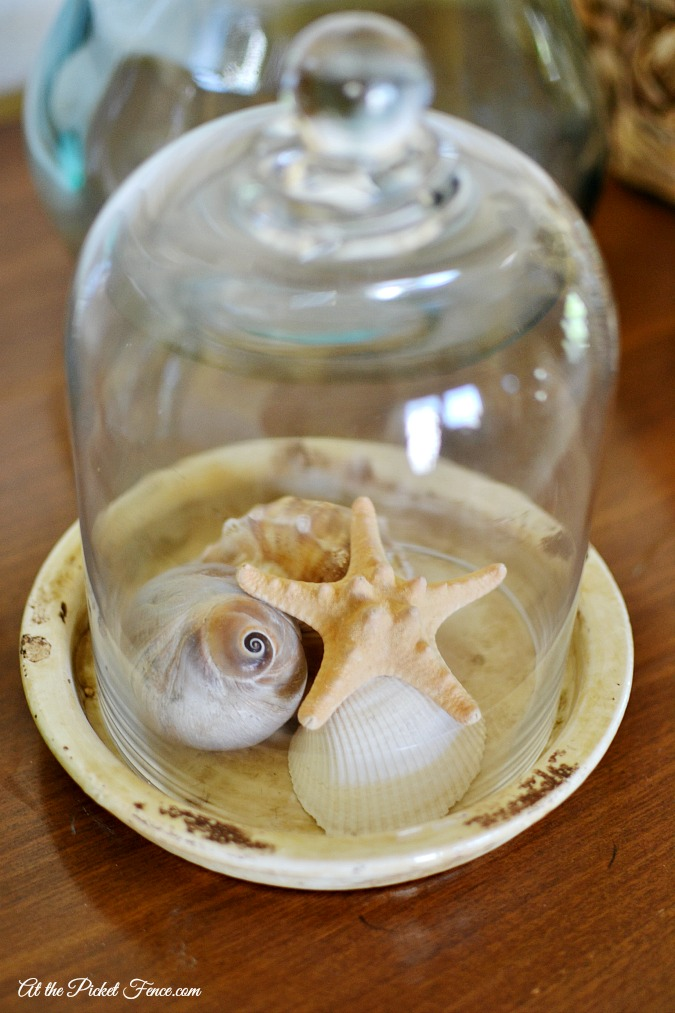 seashells under glass cloche