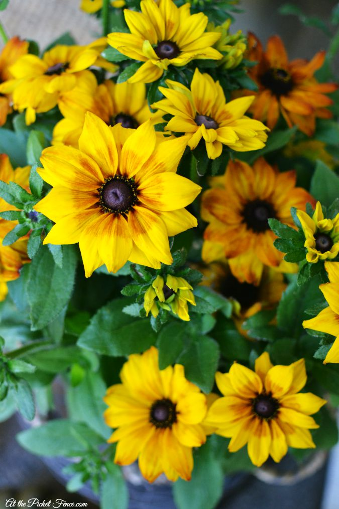 fall flowers close up atthepicketfence.com