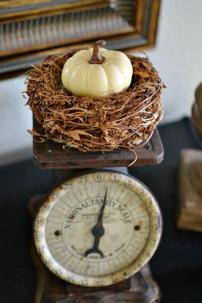 pumpkin in nest on scale