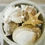 bowl of seashells