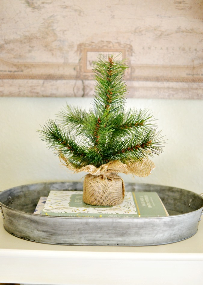 Little pine tree with burlap on galvanized tray