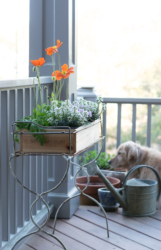 Gorgeous Flower Box Ideas